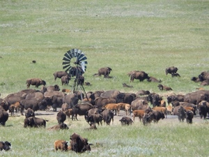 GrazeNebraska: Grazing management key  to sustaining resources on Blue Creek Ranch